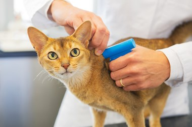 cat getting microchipped at the vet