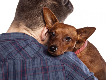 How does Family Law separation deal with pets